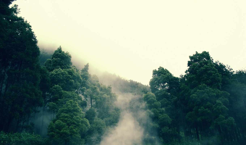 туман, лес, деревья, дерево,