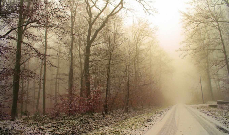 природа, снег, winter, деревья, туман, лес, иней, самая, форматы, возможность, следы, качественная, большая, закачки, коллекция,