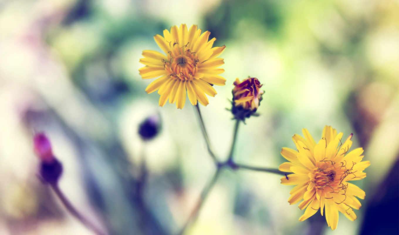 fond, ecran, fleurs, fonds, couleur, sur, jaunes, jolies, couleurs, jaune, trois,