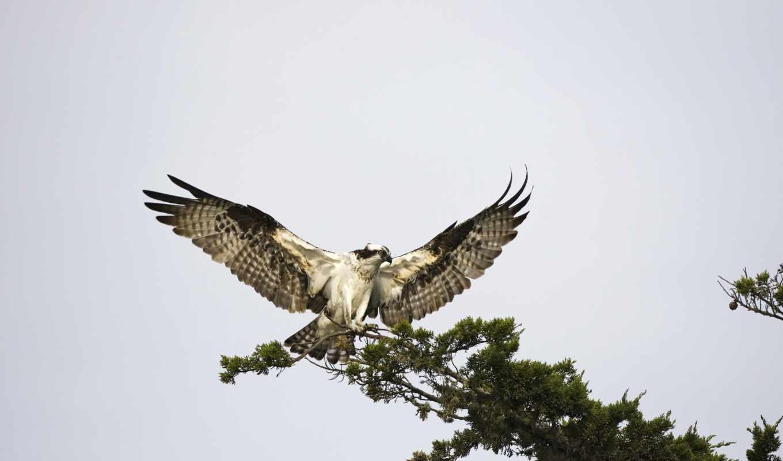 боится, птица, никогда, branch, дереве, сидящая, доверяет, ветке, she, сломается, крыльям,