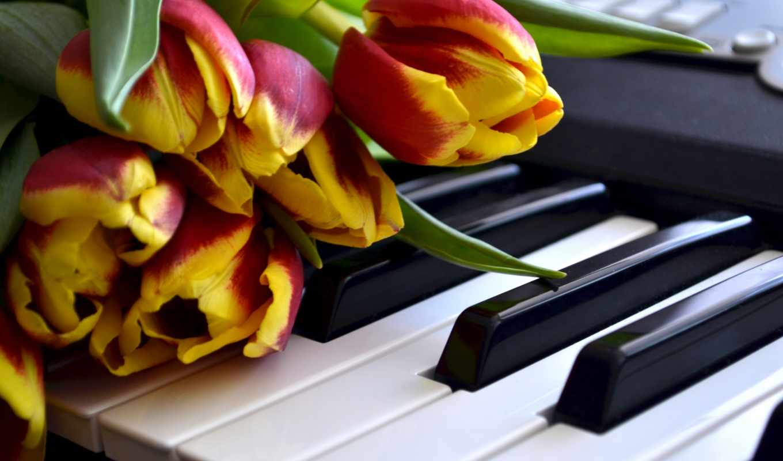 цветы, клавиши, тюльпаны, загрузок, просмотров, марта,