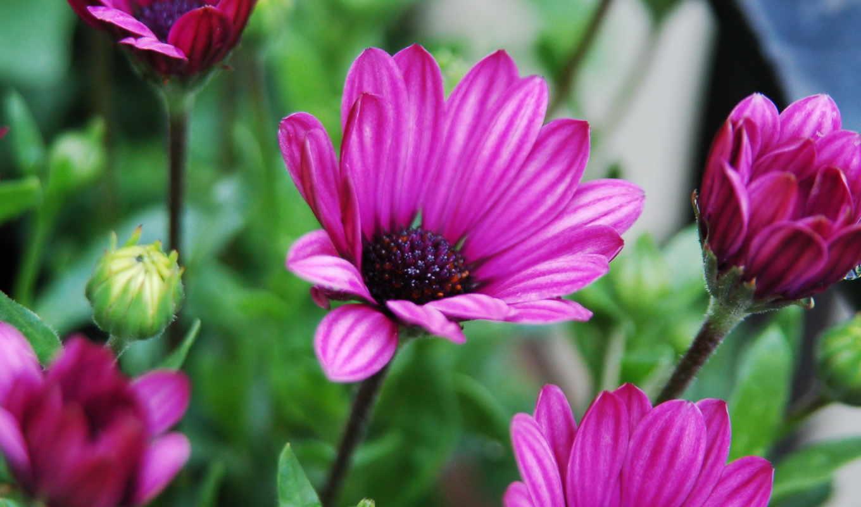 цветы, arnusha, прочитать, сообщения, целикомв, цитатник, community, свой, цитата,