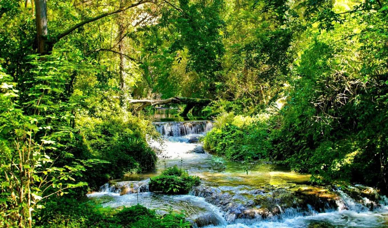лес, взгляд, деревья, ручей, bush, зелёный, поток,