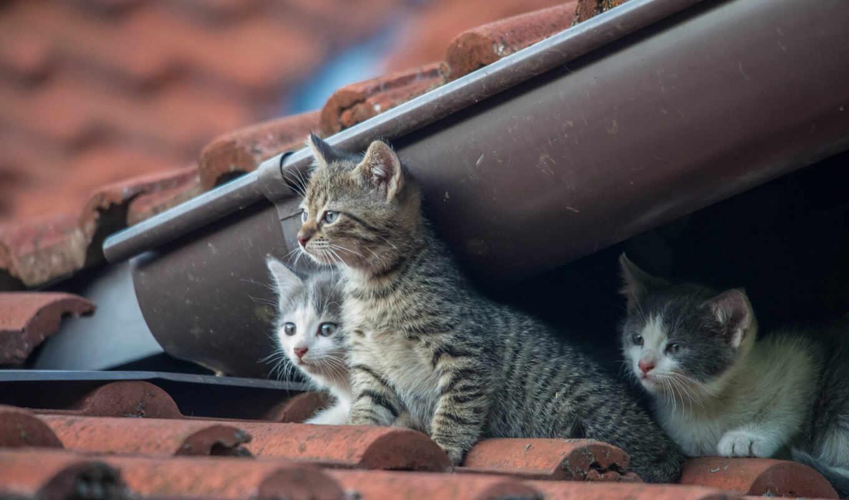 фотограф, кот, vlado, tapety, крыша, котенок, малыш, ferencic, дерево, pulpicie, pulpit