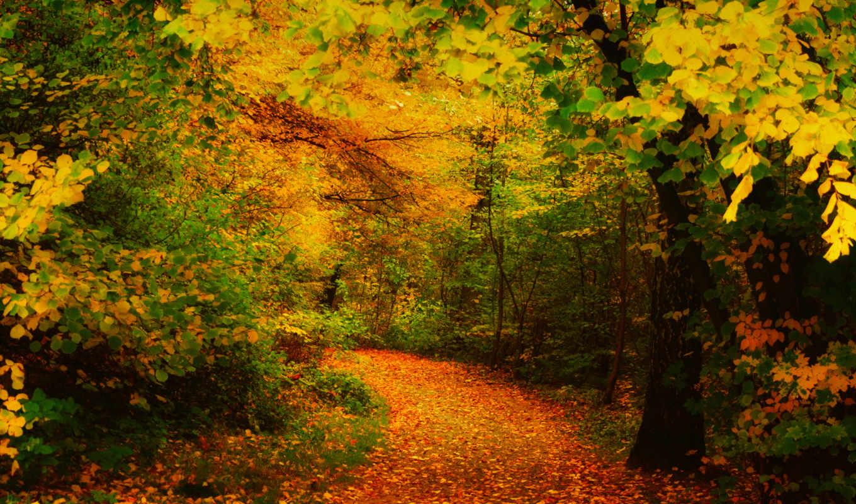 осень, желтые, листья, деревья, разделе, трек,