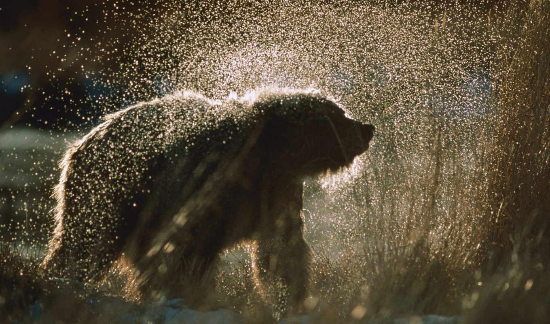 медведь, браун, ursus, трава, цветы,