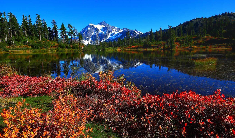 природы, manzaralar, bush, güzellikler, dünyadan, landscape, деревья, самые,