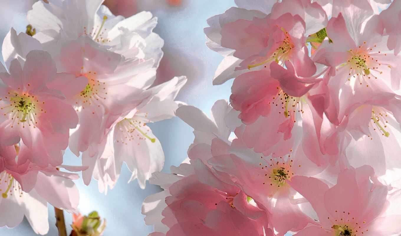 цветы, руб, нечто, фотошторы, printing,