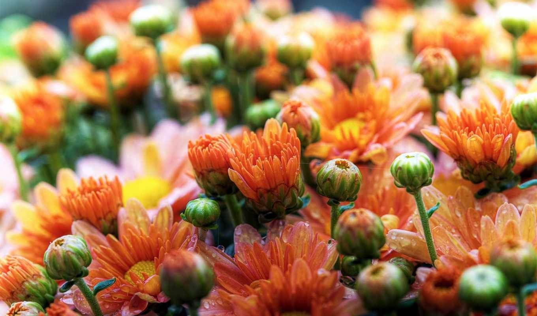 качестве, хорошем, очень, цветы, possible, букет, ценю, заставки, страница, пионов, научиться,