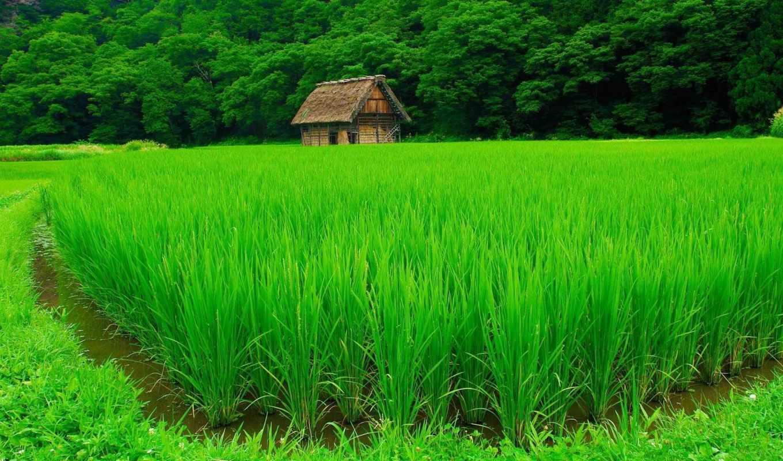 лес, поле, дом, картинка,