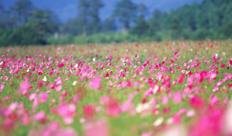 цветы, поле, лето, весна,