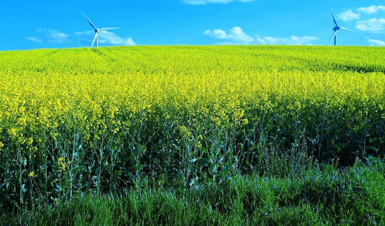 desktop, цветы, поле, landscape, dota, tagged, ветряки,