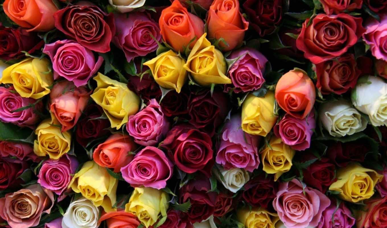 Красивые картинки с цветами для фона скачать бесплатно