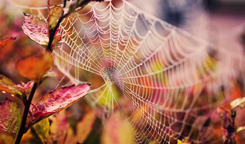 паутина, природа, ветка, листья, капли, картинку, картинка, так, же, мыши, spider, кнопкой, draw, ln,