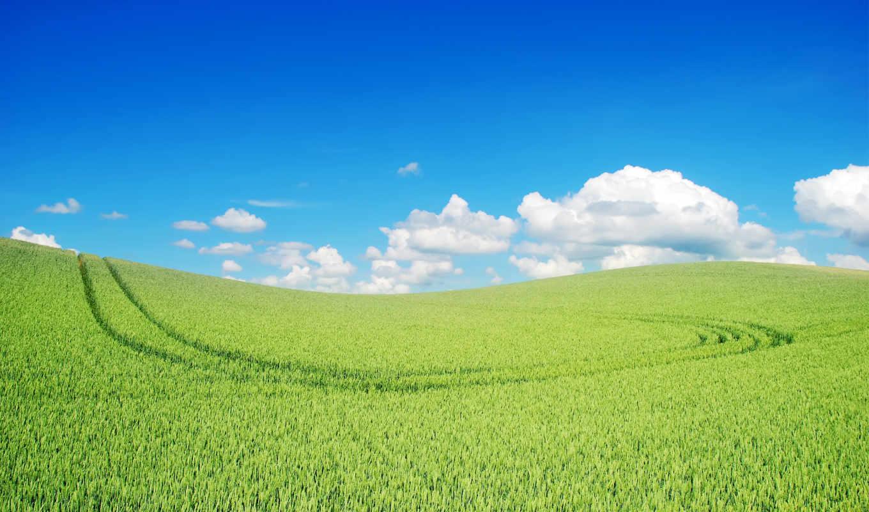 grassland, зелёный, landscape, web,