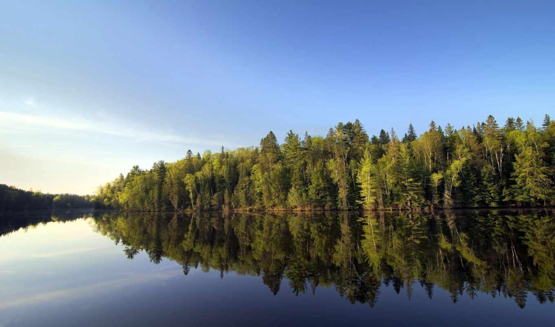 день, world, forestry, march, forests, международный,