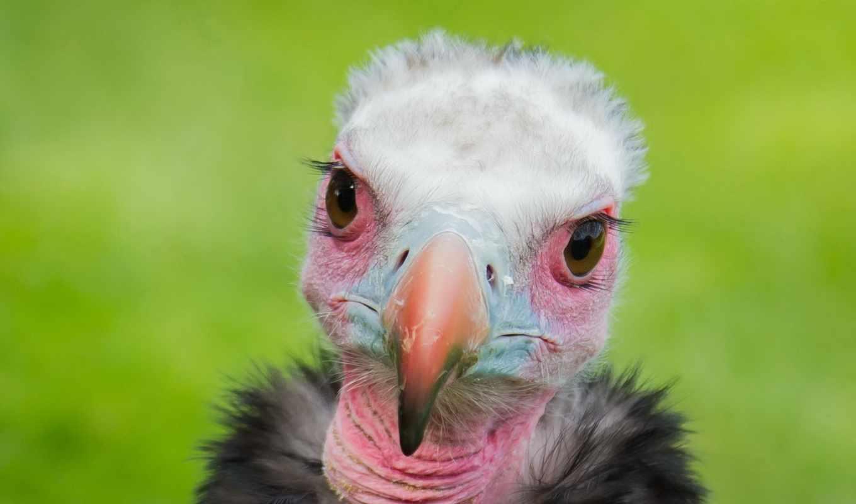 смотреть, птица, всех, птиц, zhivotnye, узнали, кадре, сегодня, будова,