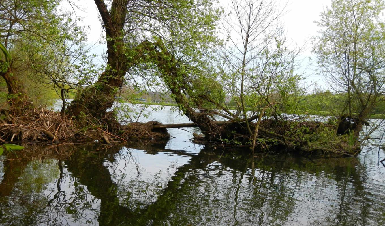 пруд, природа,