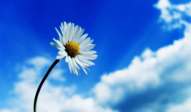 priroda, красивые, красивая, cvety, кликните, картинку,