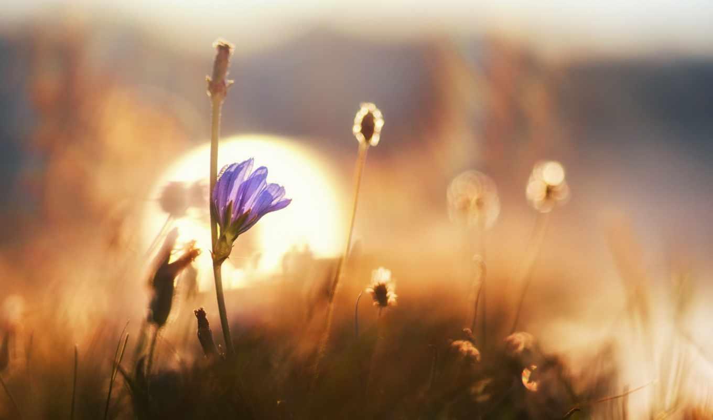 Полевые цветы на рассвете 57