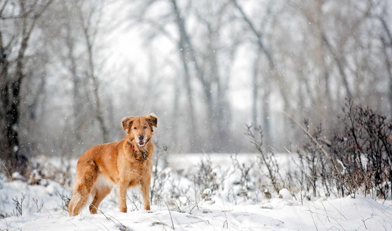 ,зима,собака,пес,снег,