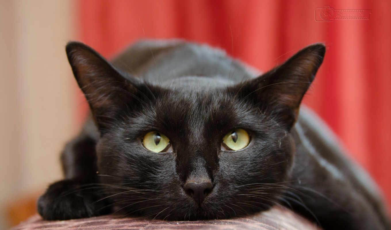 cats, tabby, mobile, котенок, teacup, cute, paws, тюлень, black,