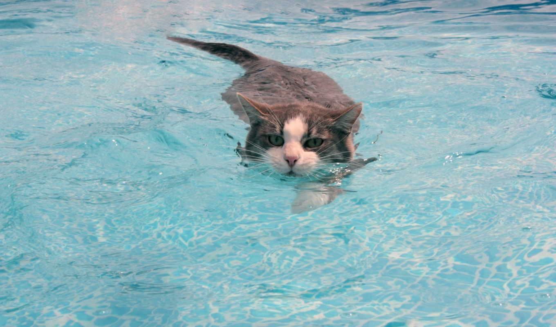 кот, воде, вода, коты, водой,