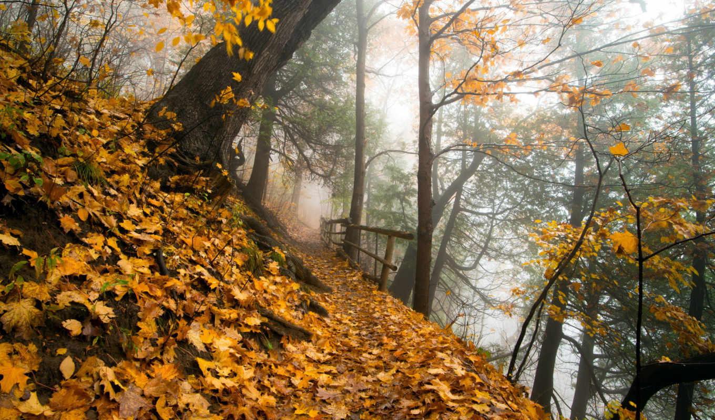 priroda, osen, ty, park, разделе,