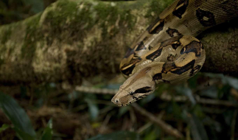 snake, животные, голова, daily, добавляются, animals, июня, глаза,