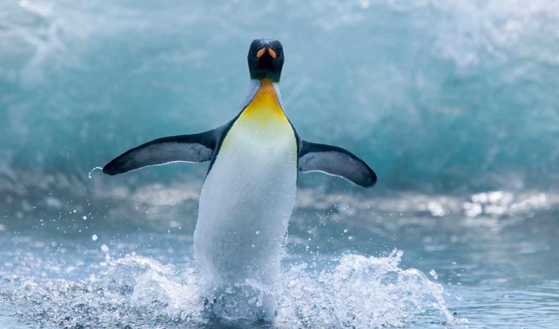 pingvin, voda, zhivotnye, океан, животных, воде, ласты, bryzgi,