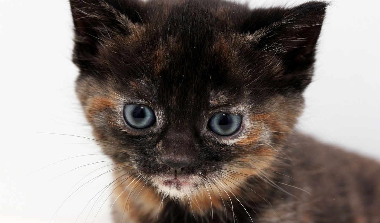 котенок, кот, cute, ipad, mouse, color, eyes,