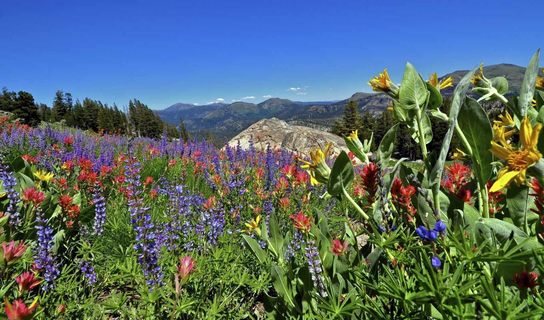 shop, sierra, горы, калифорния, gallery, невада, california, national, eldorado, цветы, forest,