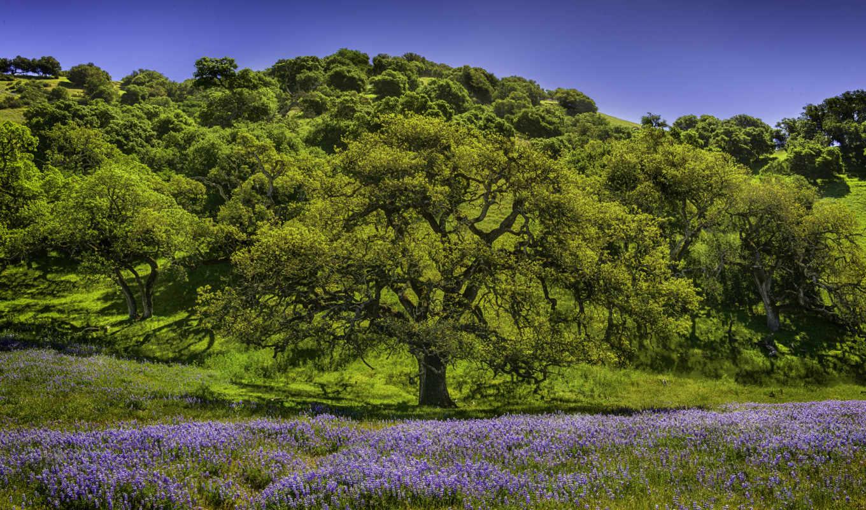 цветы, люпин, луг, деревья, pe, pădure, wald, einem, hügel, deal, una, bosque, colina, fotos,