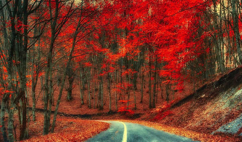 года, природа, марта, дорога, кб,