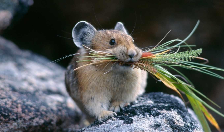 животные, positive, макро, запасы, мышка,