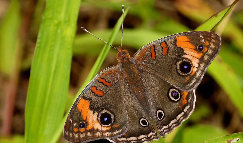 бабочки, красивые, июнь, zhivotnye, они, макро, нояб, коллекция, naturaleza, бабочка,