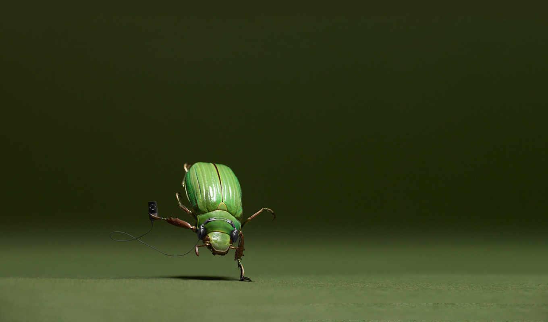 bug, facts, resolu,