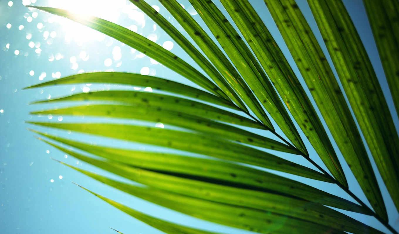 листья, пальма, небо, солнце, лето, картинка, обложки, макро, dvd,