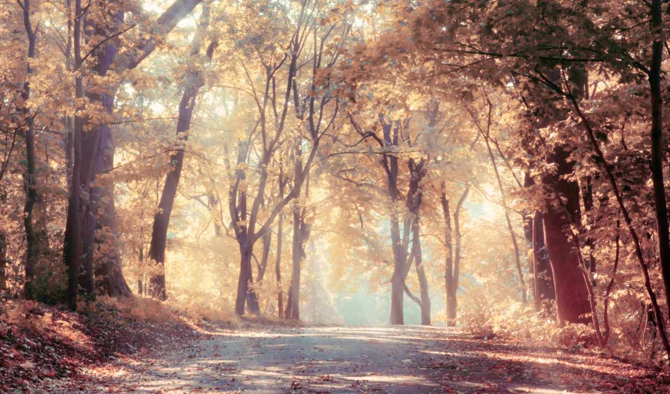 satie, trees, road, leaves, autumn, landscape, sunbeams, nature, cd, войдите, gymnopedie, kompüteriniz, üçün, mod, best, зарегистрируйтесь, нояб,