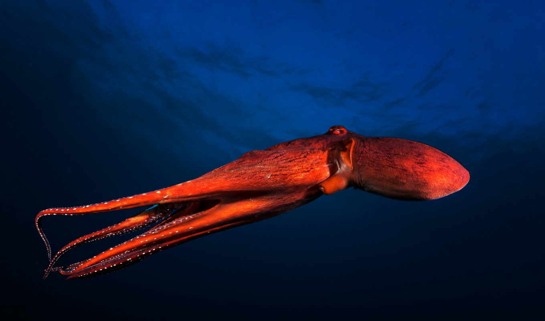 photography, underwater,