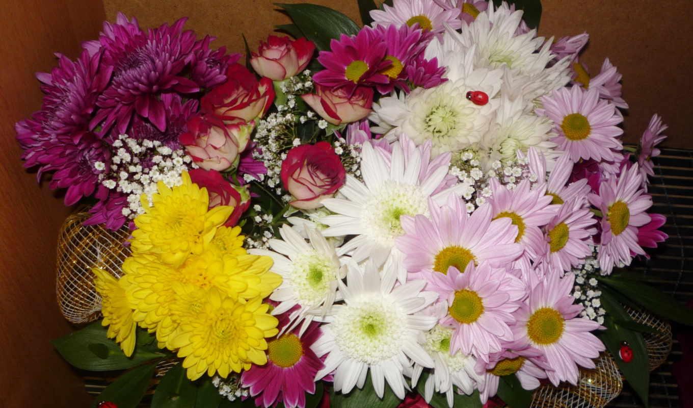 цветы, букеты, хризантемы, розы,
