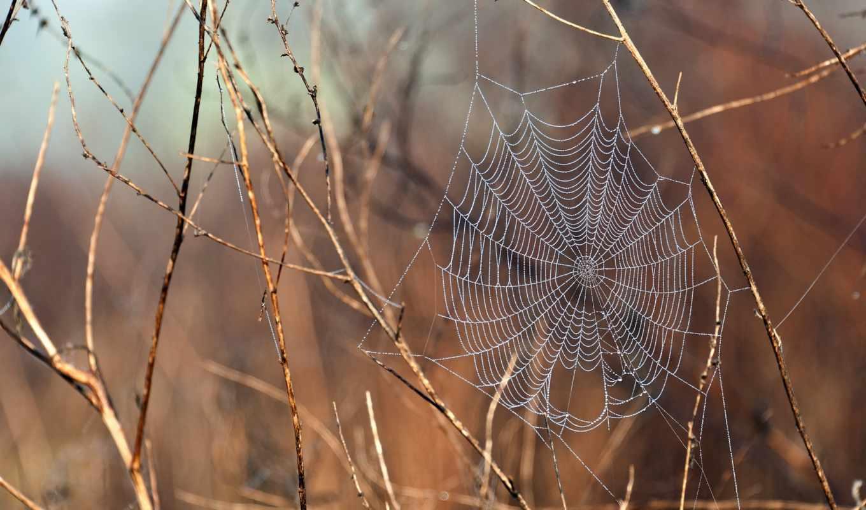 web, ветки, ветках, капли, макро, water, растения, дек, после, дождя,