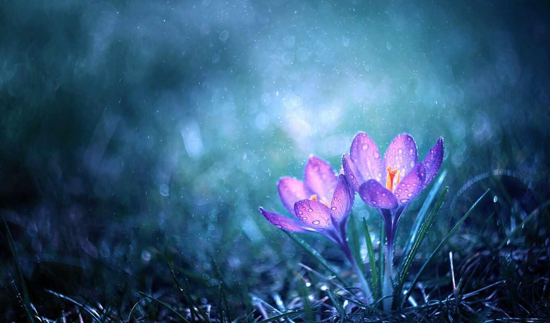 утро, цветы, magical, das, b-ropia, bersetzing, текст, lektorat, магия, baxiaart, miracle
