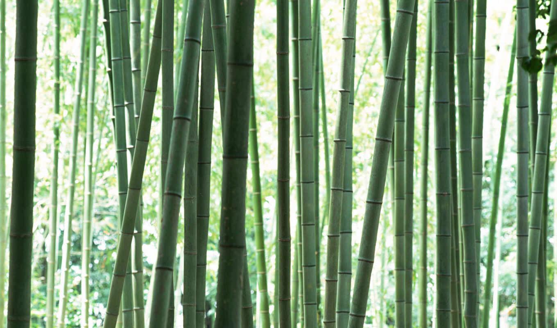 стебли, бамбука, bamboo, japan, prarllolitas, green, pictures,