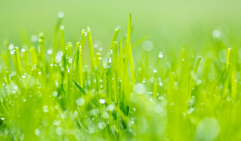 трава, зелёная, разрешениях, разных,