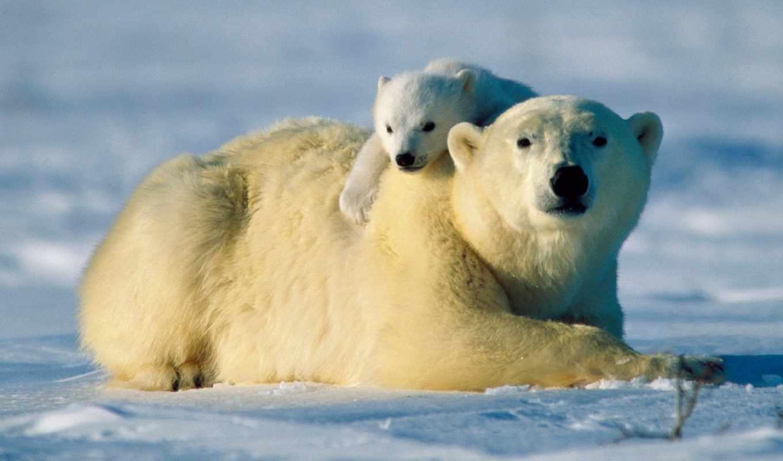 animals, love, слушали, комментарии, you,