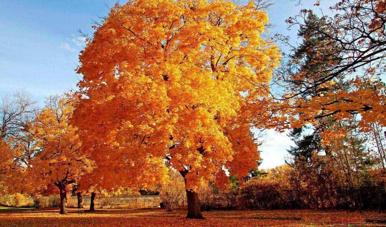 дерево, осеннее, осенние, банка, золотое, осень, time, золотые, жёлтое,