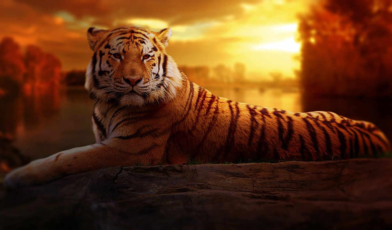 тигр, free, фото, landscape, resolution, you, fantasy,