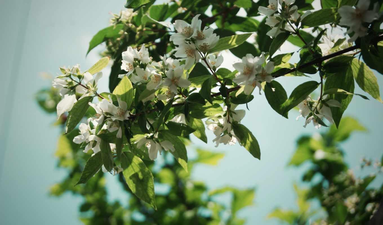 ветки, дерево, цветы, природа, листья, качестве, базе,