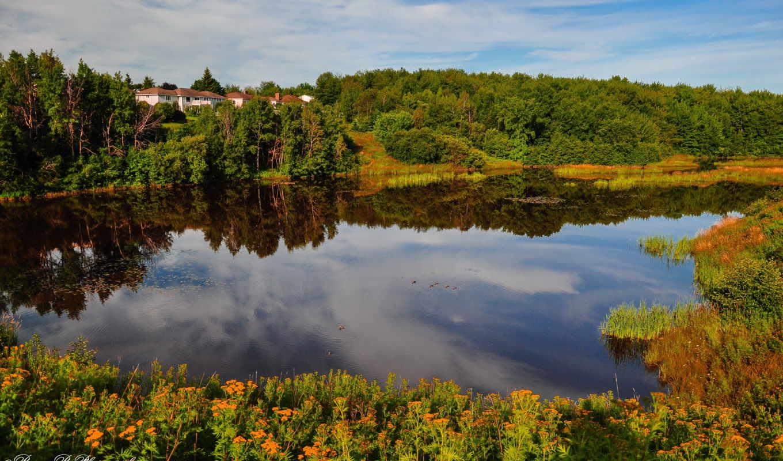 канада, природа, moncton, nb, природы, лес, деревья, landscape, монктон, дома,